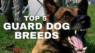 TOP 5 GUARD DOG BREEDS [HD 4K VIDEO]