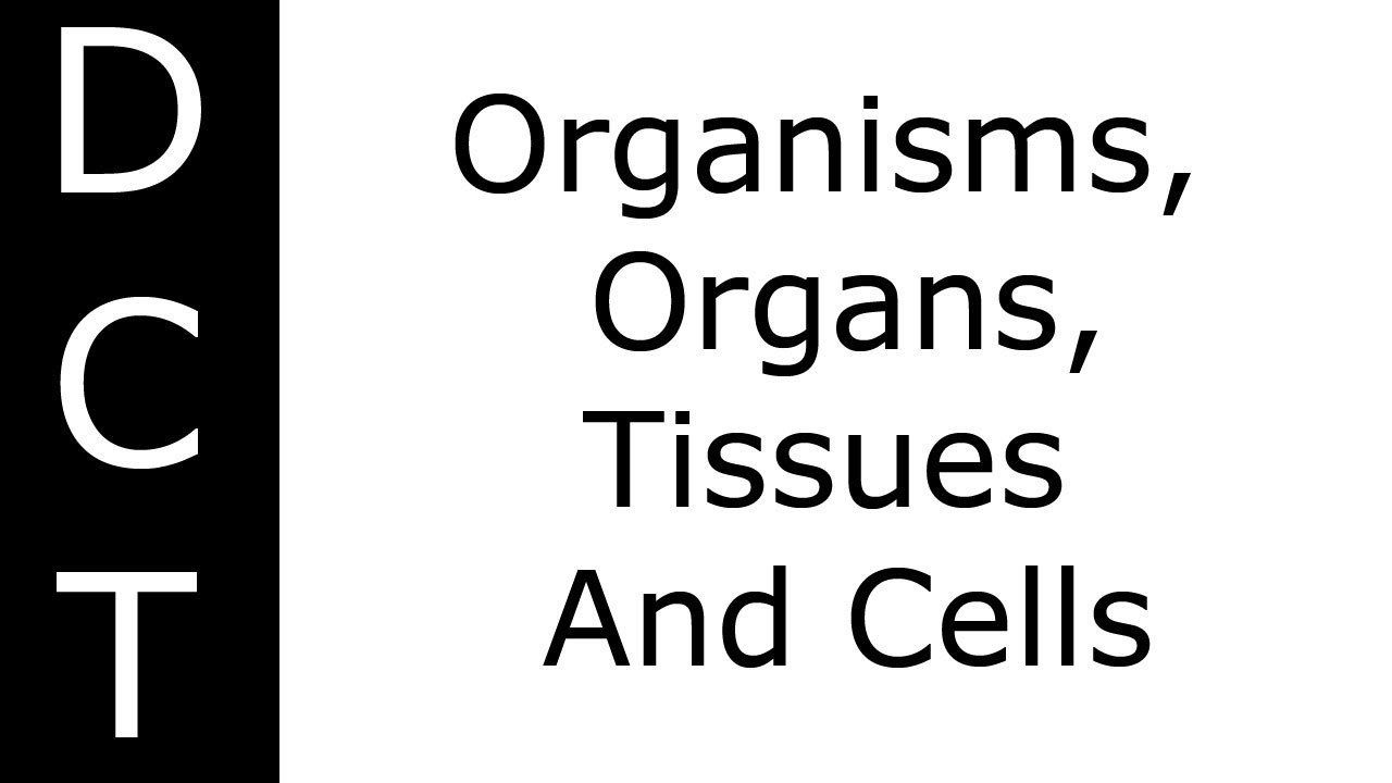 Organisms, Organs, Tissues And Cells (KS3/K7-11 Biology