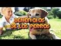 12 Beneficios de tener un perro