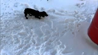 Прикол. Самая быстрая прогулка с собакой.