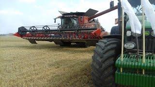 Żniwa 2016- Koszenie pszenicy na większą skale