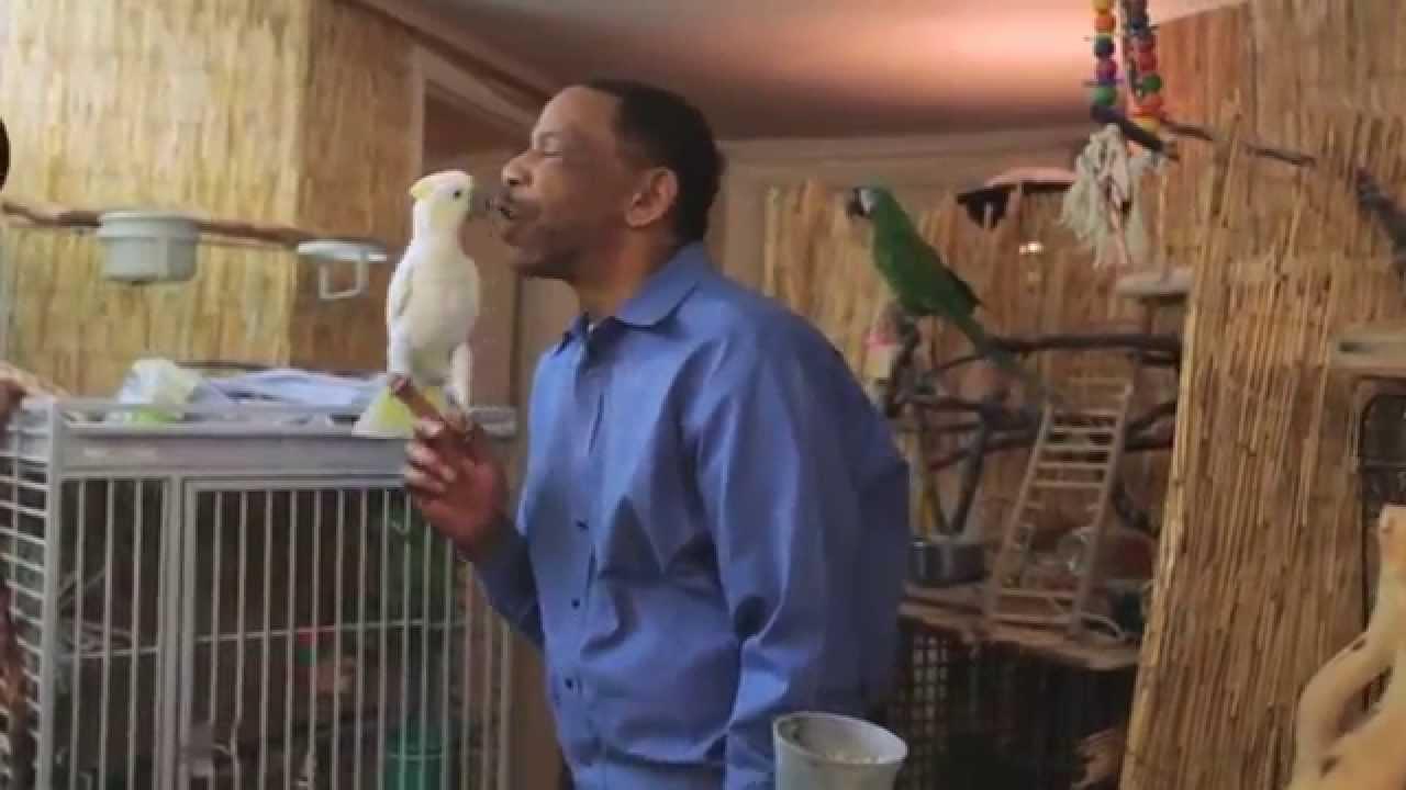 Northwest Bird Rescue – Home