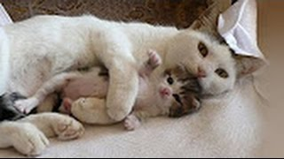 mother cats protecting kittens