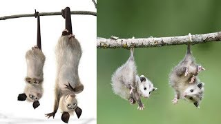 Over The Hedge ALL Characters In Real Life