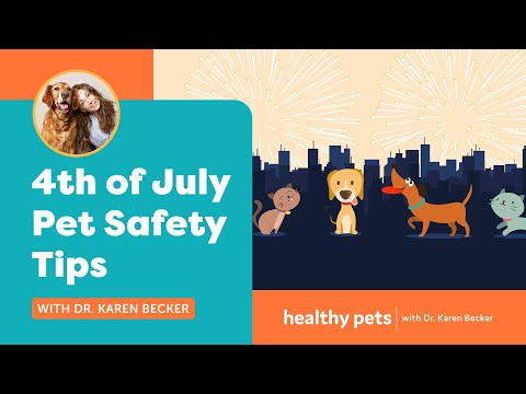 Jenni Chase - Protecting your pets this Fourth of July