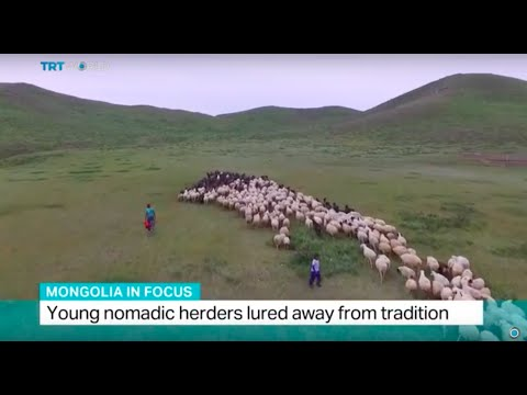 Mongolia in Focus: Young nomadic herders lured away from tradition, Shamim Chowdhury reports