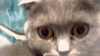 Моя любимая кошка My Favorite cat