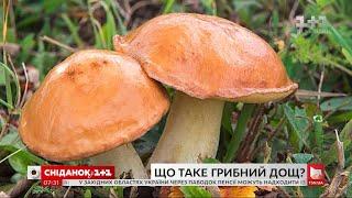 Який дощ ми називаємо грибним і чому – Поп-наука
