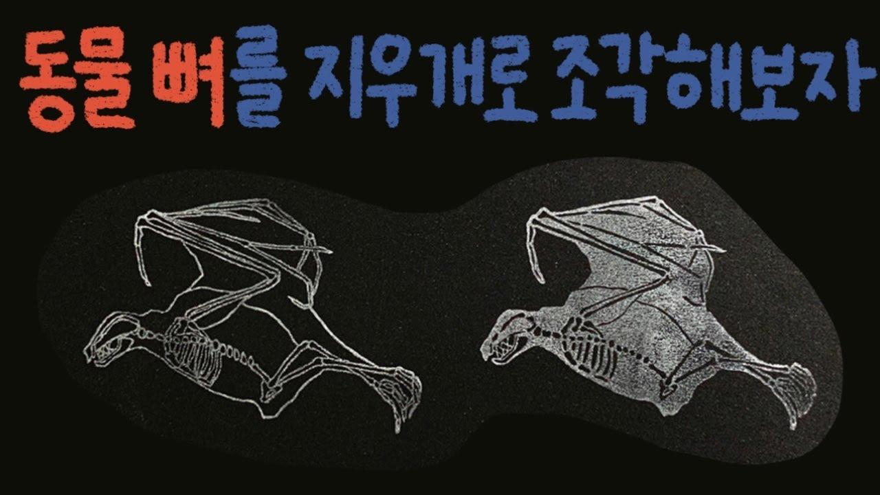 [지우개 도장] 박쥐 뼈를 조각해 볼게요🦇 / Animal X-ray eraser stamp