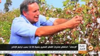 تقرير الإحصاء انفخاض صادرات القطن المصري بنسبة 2 54% بسبب تراجع الأنتاج