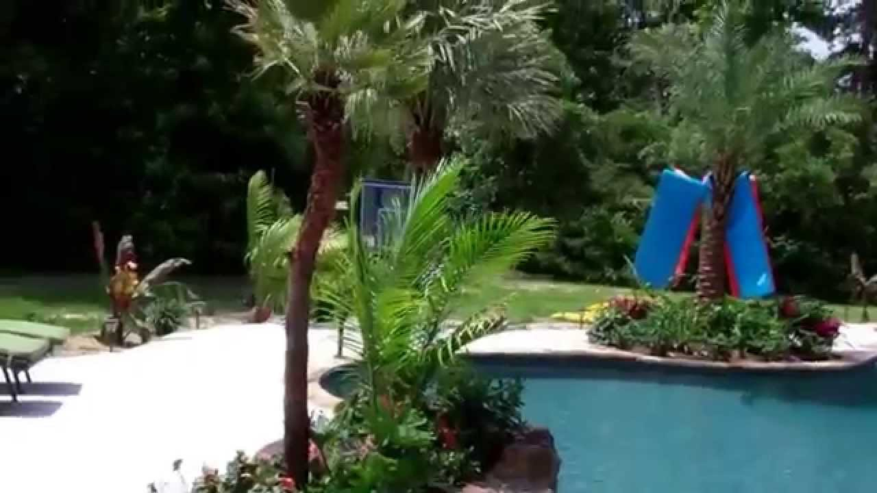 palm trees pool landscape houston dallas austin san antonio