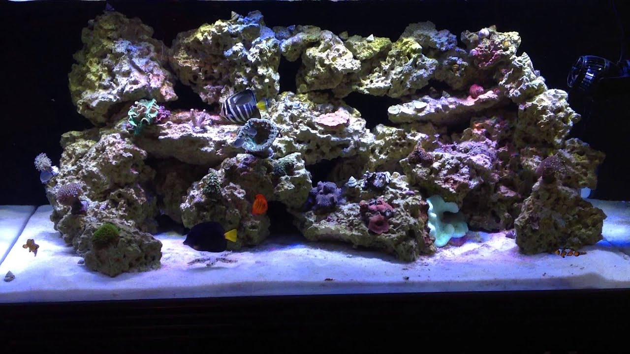 120g Reef Tank Clear White Reef Slime