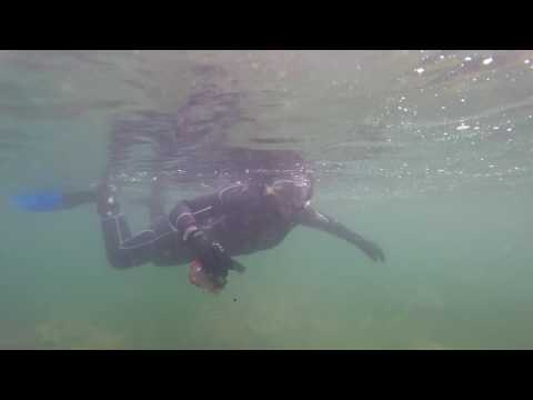 Snorkelling in a 'baitball' at Portland Harbour, Dorset.
