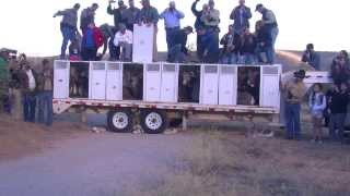 Bighorn Sheep Release Santa Catalina Mountains 11/18/2013