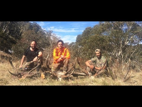 Stalking Sambar Stags Oct 2017, Backpacking Into Vic Highcountry, MountainManHuntingFilms