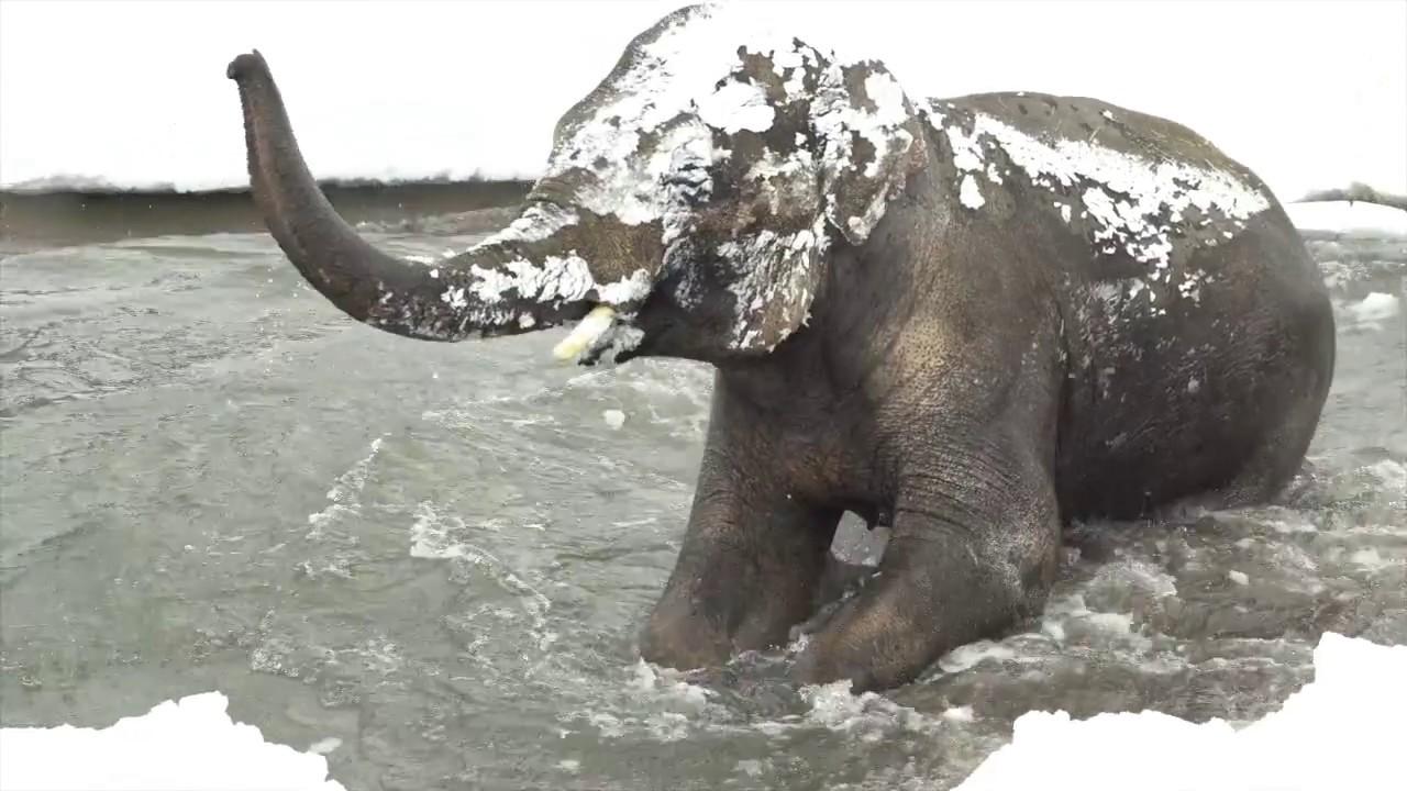 Osos polares, elefantes, focas y nutrias marinas disfrutan como niños de la nieve
