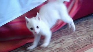 Playing with my white cat