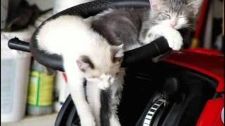 Эти милые коты и кошки / Those amazing cats(, 2011-08-24T14:49:02.000Z)