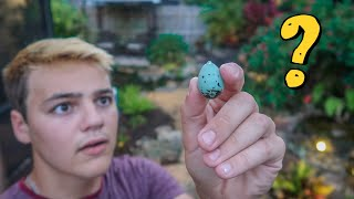 RARE BLUE EGG FOUND in My Backyard!! (what is it??)