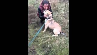 Встреча хозяйки и потерявшейся собаки через 1,5 года