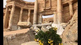 Древности, нефть и газ. Что Россия ищет на побережье Сирии? (Zaman Al-Wasl, Сирия).
