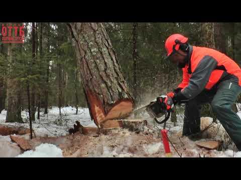 Видеоинструкция по охране труда при проведении лесосечных работ в зимний период