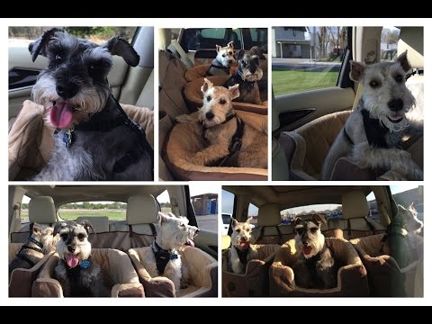 K&H Bucket Booster Pet Seat Small- Dog Car Seat REVIEW