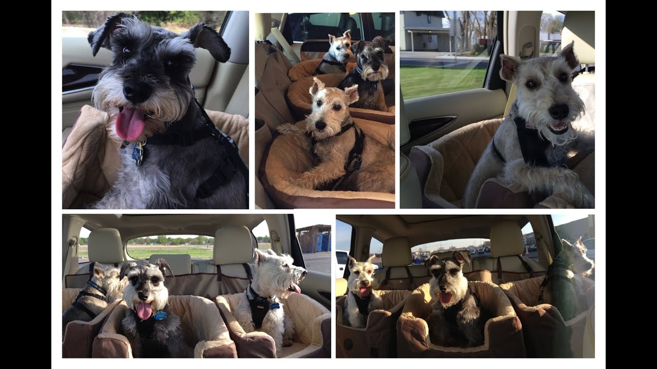 KH Bucket Booster Pet Seat Small Dog Car REVIEW