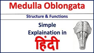 Medulla Oblongata Structure and Function simple explaination in Hindi | Bhushan Science