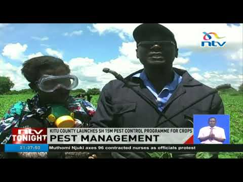 Kitui county launches Ksh 1.5m pest control programme for crops