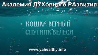 КОШКА ВЕРНЫЙ СПУТНИК ВЕЛЕСА | пройти просвящение жива | Обучение в Киевской области