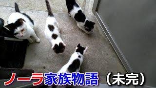 9月の半ばに我が家にやって来るようになった野良猫ノーラ一家(ノーラと子猫3匹)との記録です。 熟慮の上「食」と「住」(必要なら医療)を提供し、完全な野良猫でも家猫でも ...