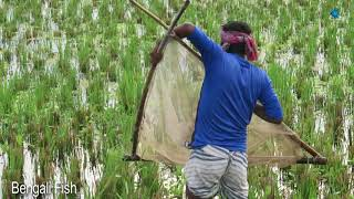 fishing videos By Bengali People | Natural resources fish, fish adventure