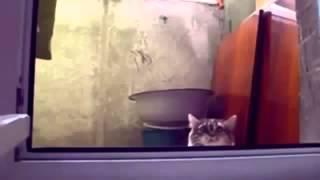 Коты бывают смешными