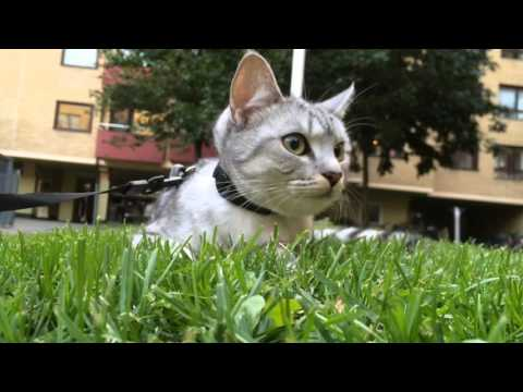 Cat Documentary