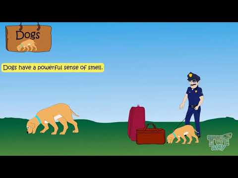 how to take care of domestic animals