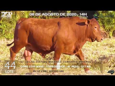 LOTE 44 CORO 2310