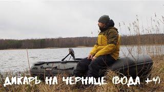 Ловля карпа в завоз по очень холодной воде весной Беларусь Черница март 2020