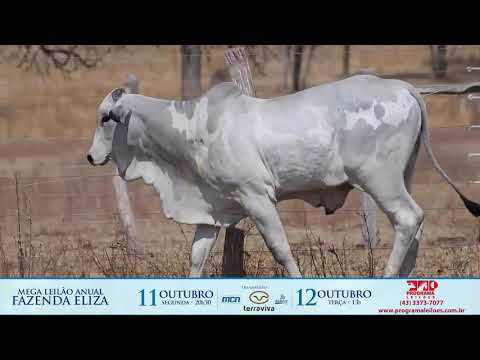 LOTE 103A