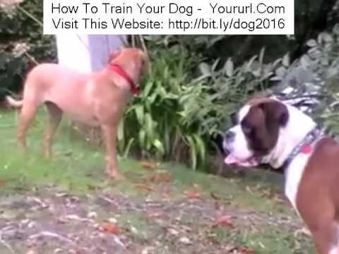 When Will My Puppy Start to Bark? - Vetstreet