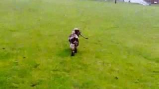 Stickdog - English Cocker Spaniel - Chocolate / Liver Roan
