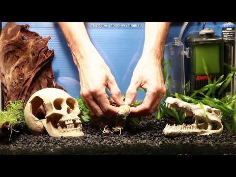 Вариант оформления аквариума на 50 л