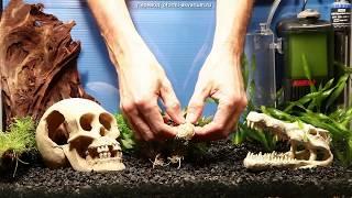 Вариант оформления аквариума на 50 л(Такой вариант оформления аквариума хорошо подойдет начинающим аквариумистам, с ним легко добиться успеха...., 2015-02-05T16:11:22.000Z)