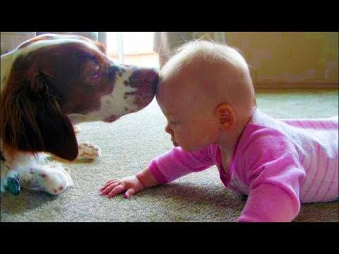 Dogs loves Baby | Adorable Moment Babies and Dog