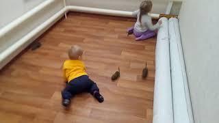 Домашние белки дегу бегают по комнате. 4 белочки