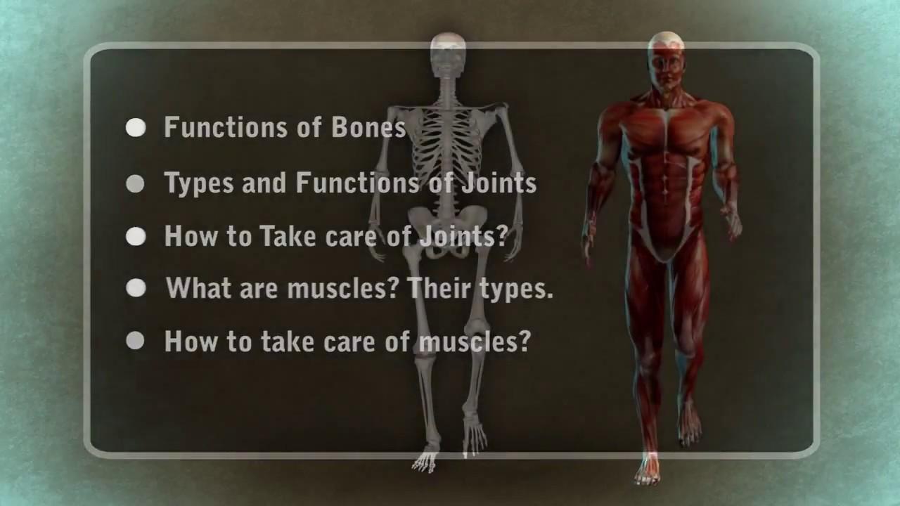 The Human Body 3d Video Chaitu Chetan Thewikihow