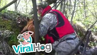 Calf Rescued from Steep  River Bank || ViralHog