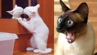 Я ржал до слез / смешные видео 2021 / новые смешные видео про кошек