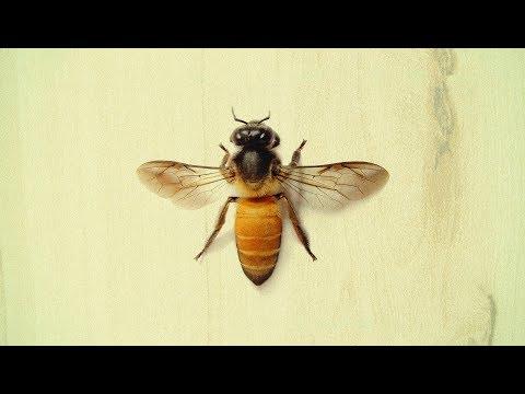 Max the Lesser - Me In Honey
