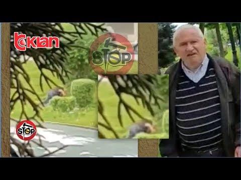 Stop - Tirane/ I moshuari abuzon seksualisht me djalin e mitur! (05 qershor 2019)